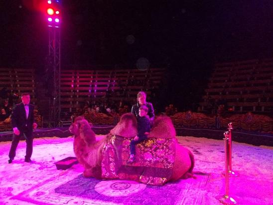Alex on a camel